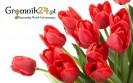 kwiaty-gromnik24